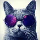 黑猫警长、黑黑