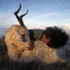 山羊Dexter