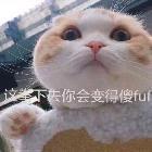 高能-林枫