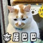楚恒-小奶猪