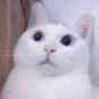 YM-奶猫