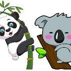 树袋熊和熊猫